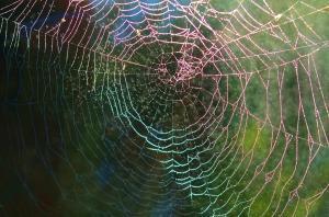 spider-web-615272_960_720